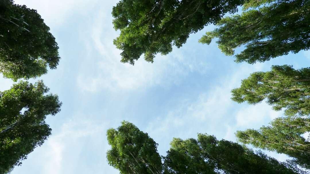 groene-kathedraal-m-boezem-wolken