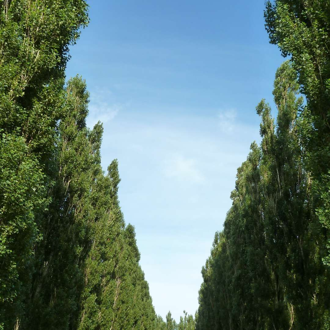 Marinus-Boezem-kathedraal-bomen-lucht